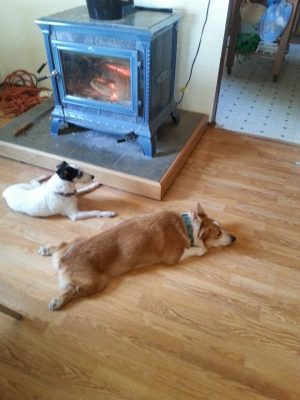 Introducing A New Dog To A Home With Resident Dogs